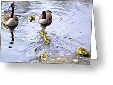 New Spring Baby Geese Greeting Card