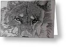 Wolf. Greeting Card by Cynthia Adams