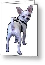 New York City Doggie 2002 What Are You Looking At 1a Jgibney Art 2009 Transp Greeting Card