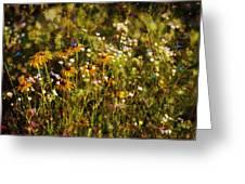New York Wildflowers Xxvi Greeting Card