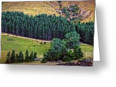 New Zealand Countryside Greeting Card
