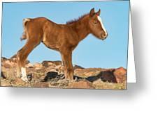 Newborn Colt Greeting Card