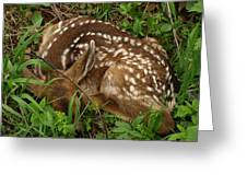 Newborn Fawn Greeting Card