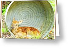 Newborn Fawn Finds Shelter In An Old Washtub Greeting Card