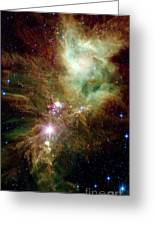 Newborn Stars In The Christmas Tree Greeting Card
