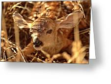 Newly Born Fawn Hiding In A Saskatchewan Field Greeting Card