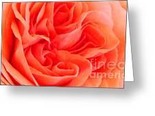 Newport Orange Greeting Card