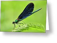 Beautiful Demoiselle Damselfly Greeting Card