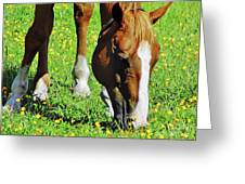 Nibbling On Flowers Greeting Card