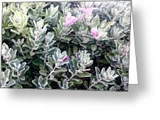 Nice Flowers  Greeting Card