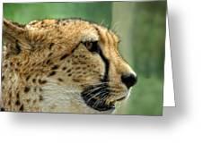 Nice Kitty Greeting Card