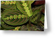 Nice Leaves Greeting Card