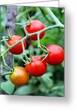Nice Tomatoes Greeting Card
