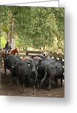 Nick Loading Cattle Greeting Card
