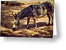 Nigerian Donkey Greeting Card