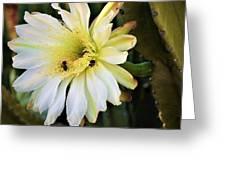 Night Bloomer Greeting Card