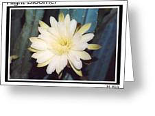 Night Bloomer Posters Greeting Card