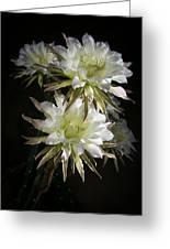 Night Bloomers 4.21 Greeting Card