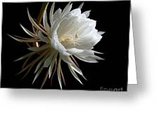 Night-blooming Cereus 1 Greeting Card by Warren Sarle