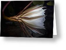Night Blooming Cereus Greeting Card