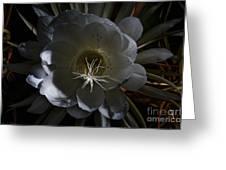 Night-blooming Cereus Deep 2 Greeting Card by Warren Sarle