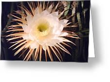 Night-blooming Cereus Greeting Card