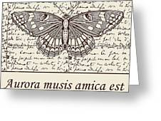 Night Butterfly On Old Letter Greeting Card