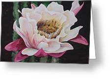 Night Cactus Greeting Card