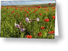 Night Flowering Catchfly And Poppies Greeting Card
