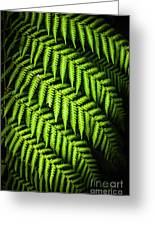 Night Forest Frond Greeting Card