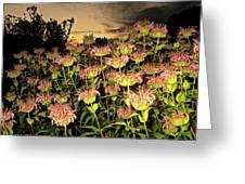 Night Garden Series Greeting Card