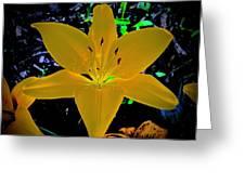 Night Glow Lily Greeting Card
