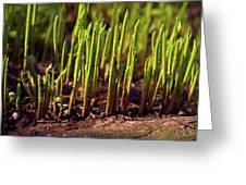 Night Growth Greeting Card