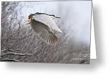 Night Heron In Flight Greeting Card
