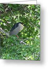Night Heron Greeting Card