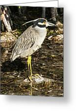 Night Heron Standing On A Rock In Key West Greeting Card