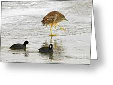 Night Heron With Coots Greeting Card