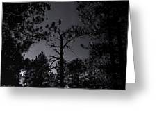Night In The Druid Cathedral Greeting Card