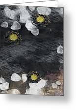 Night Lotus Greeting Card