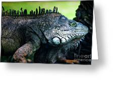 Night Of The Iguana Greeting Card