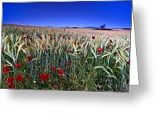 Night Poppies Greeting Card