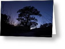 night sky and trees in Molino Canyon Mount Lemmon AZ Greeting Card