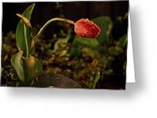 Night Tulip II Greeting Card