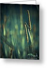 Night Whispers Greeting Card by Aimelle