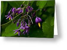 Nightshade Wildflowers #5607 Greeting Card