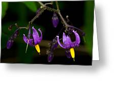 Nightshade Wildflowers #5616 Greeting Card