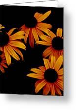 Nighttime Flowers Greeting Card