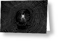 Nighttime Spider And Web Greeting Card