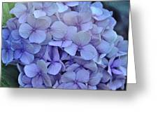 Nikko Blue Petals Greeting Card