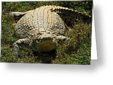 Nile Crocodile - Africa Greeting Card